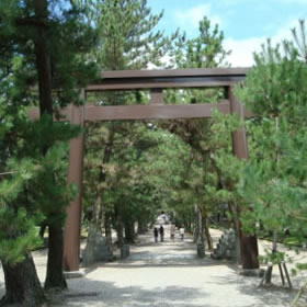 樹齢数百年の松並木の参道
